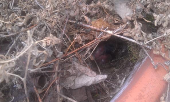 Peeking into the nest