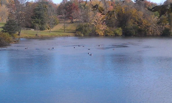 Close-up of north end of lake with geese