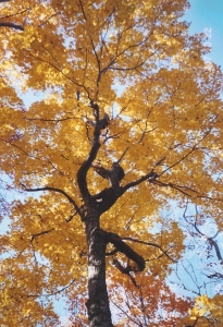 Cory's Tree